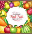 fruit frame sketch poster for food drink design vector image vector image