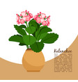 kalanchoe plant in pot banner vector image vector image