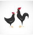 male and female chickens design on white vector image vector image