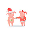 male and female piglets new year or christmas vector image