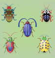 set of five colorful beetles vector image vector image