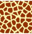 animal print pattern vector image