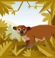 flat geometric jungle background with kinkajou vector image vector image