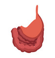 human stomach intestine biology medical vector image