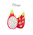 pitaya pitahaya exotic juicy fruit isolated vector image