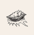 seashell sink hand drawn vector image