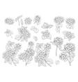 set line art hydrangea motifs vector image vector image