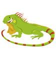 cartoon green iguana animal character vector image
