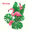 flamingo and tropical leaves summer time concept vector image