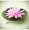 lotus flower on the leaf vector image vector image