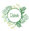 aromatic medicinal herbs grand wormwood green vector image vector image
