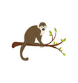 flat icon of small monkey sitting on tree vector image vector image
