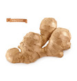 ginger root 3d realistic vector image vector image