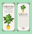 vintage label with dieffenbachia plant vector image vector image