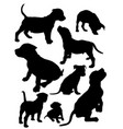 puppies pit bull vector image vector image