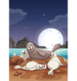 Seals living by the sea at night vector image vector image