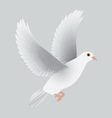 white dove isolated gray vector image