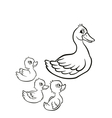 Kind duck and free little cute ducklings swim on t vector image vector image