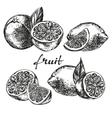 fruit orange lemon and lime set hand drawn vector image