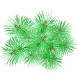 fir tree branch vector image vector image