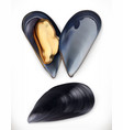 mussels 3d icon seafood realism style vector image