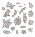sketch graphic collection of stylized vector image vector image