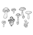 Collection of black and white hand drawn mushrooms vector image vector image
