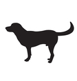 image of an dog labrador vector image vector image