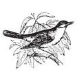nightingale vintage vector image vector image