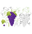 red purple grape and outline isolated on white vector image