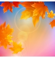 Beautiful autumn Leaves vector image vector image