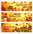 hello autumn banner with fall leaf frame border vector image