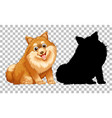 cute pomeranian dog and its silhouette on vector image