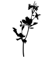 grass celandine vector image vector image