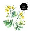 hand drawn watercolor celandine flower painted vector image vector image