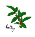 holly ilex branch with berry and leaves on white vector image vector image
