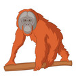 orangutan icon cartoon style vector image vector image