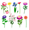 flowers and floral elements collection vector image
