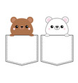 grizzly white bear set head face in pocket vector image