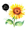 hand drawn watercolor sunflower painted sketch vector image