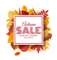 autumn sale background template with bright leaves vector image vector image