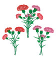 red carnation or clove flower spring bouquet vector image vector image