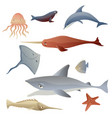 sea fish collection on white background vector image