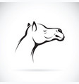 camel head on white background wild animals vector image vector image