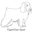 cocker spaniel dog outline vector image vector image