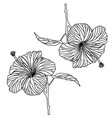 contour drawing of hibiscus flower black and vector image