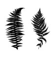 different ferns vector image vector image