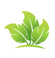 ecological leafs foundation logo vector image