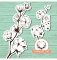 hand drawn stems of cotton plants vector image