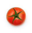 realistic ripe red tomato isolated on white vector image